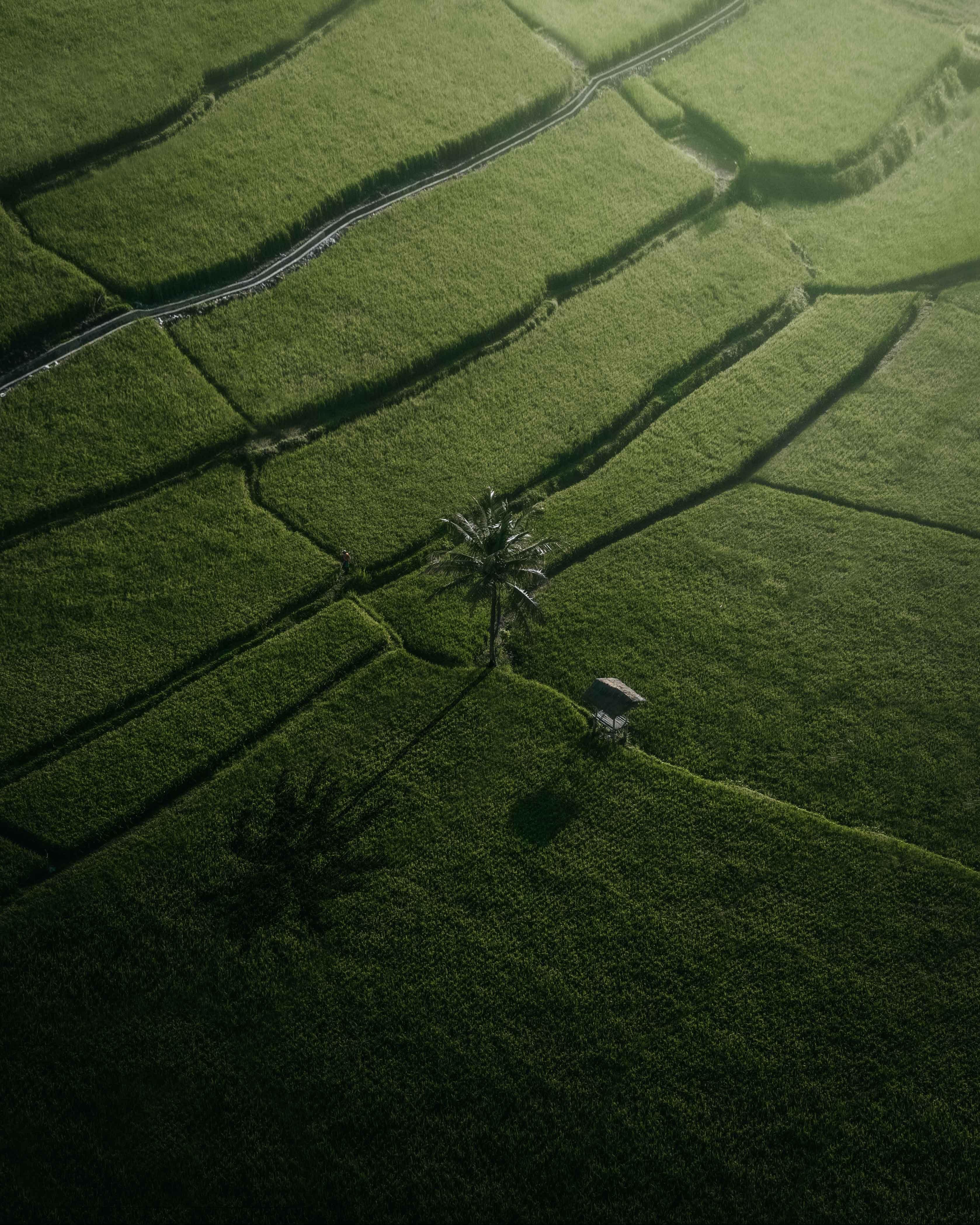 151733 Hintergrundbild herunterladen Natur, Felder, Blick Von Oben, Palme, Palm - Bildschirmschoner und Bilder kostenlos
