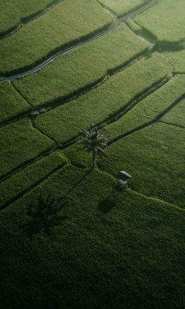151733 Заставки и Обои Поля на телефон. Скачать Природа, Поля, Пальма, Вид Сверху, Зеленый картинки бесплатно