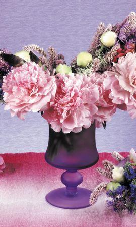 5345 скачать обои Растения, Цветы - заставки и картинки бесплатно