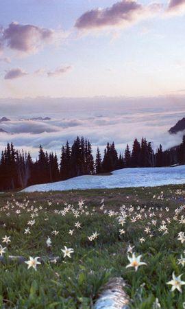 22929 скачать обои Растения, Пейзаж, Цветы, Горы, Снег - заставки и картинки бесплатно