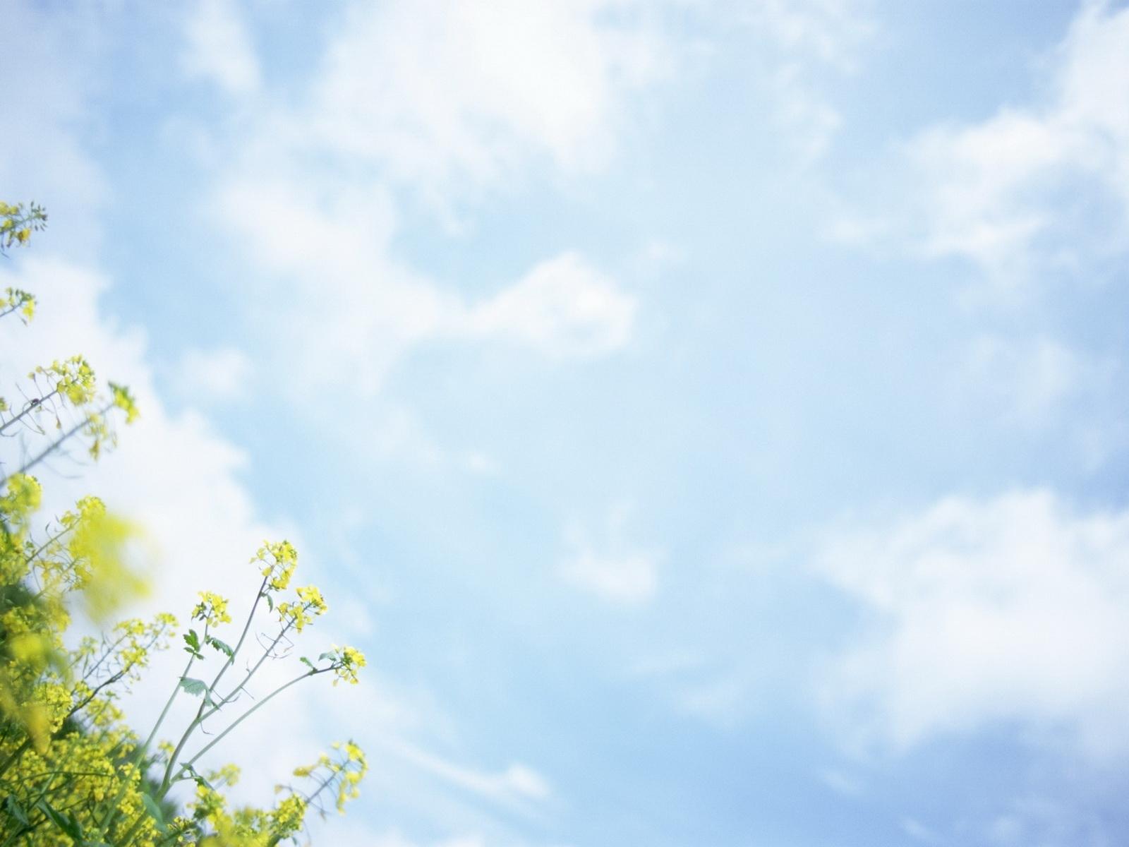1593 скачать обои Пейзаж, Трава, Небо - заставки и картинки бесплатно