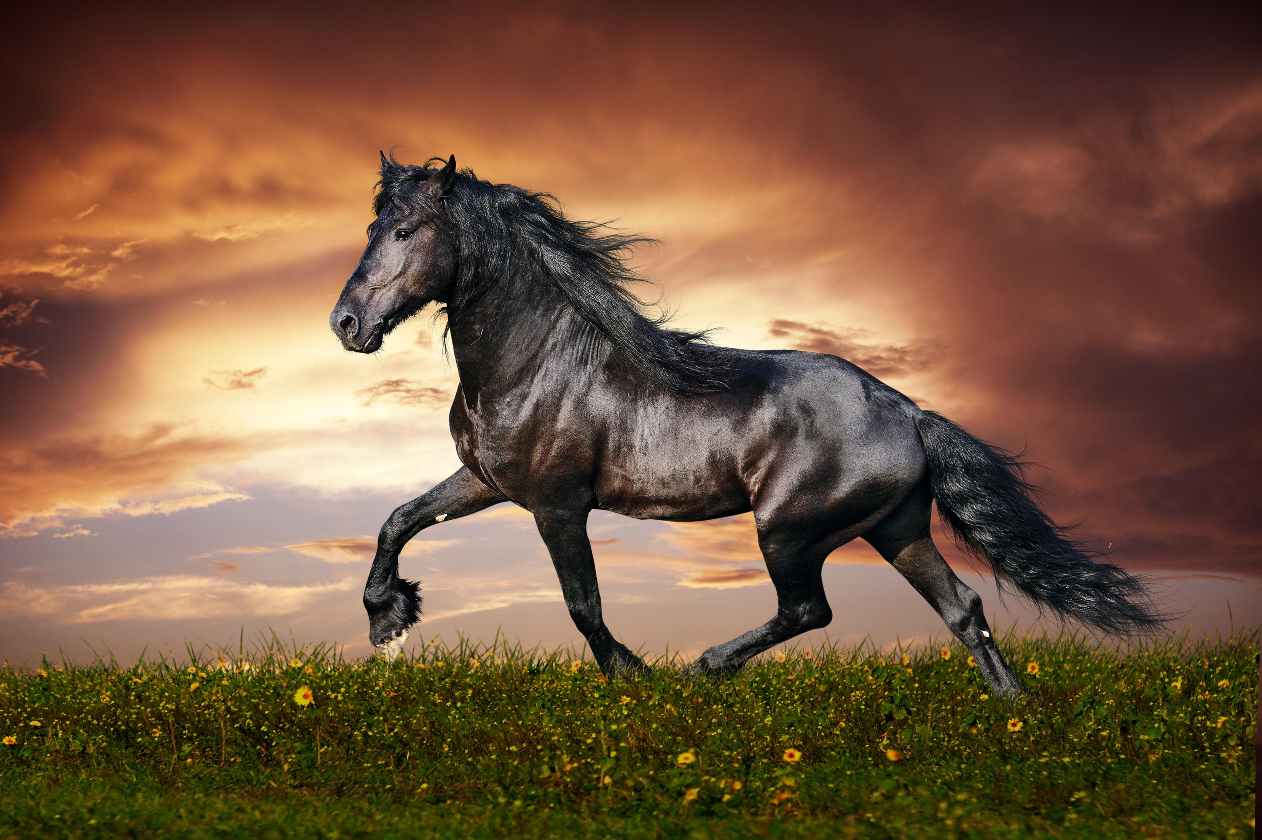 119467 скачать обои Животные, Конь, Бег, Закат, Поле, Трава, Лошадь, Цветы - заставки и картинки бесплатно