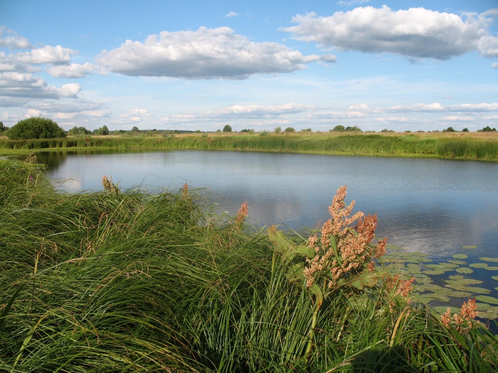 1690 скачать обои Пейзаж, Вода, Трава, Небо - заставки и картинки бесплатно