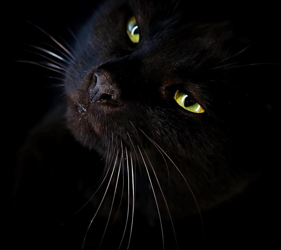 20672 скачать Черные обои на телефон бесплатно, Кошки (Коты, Котики), Животные Черные картинки и заставки на мобильный