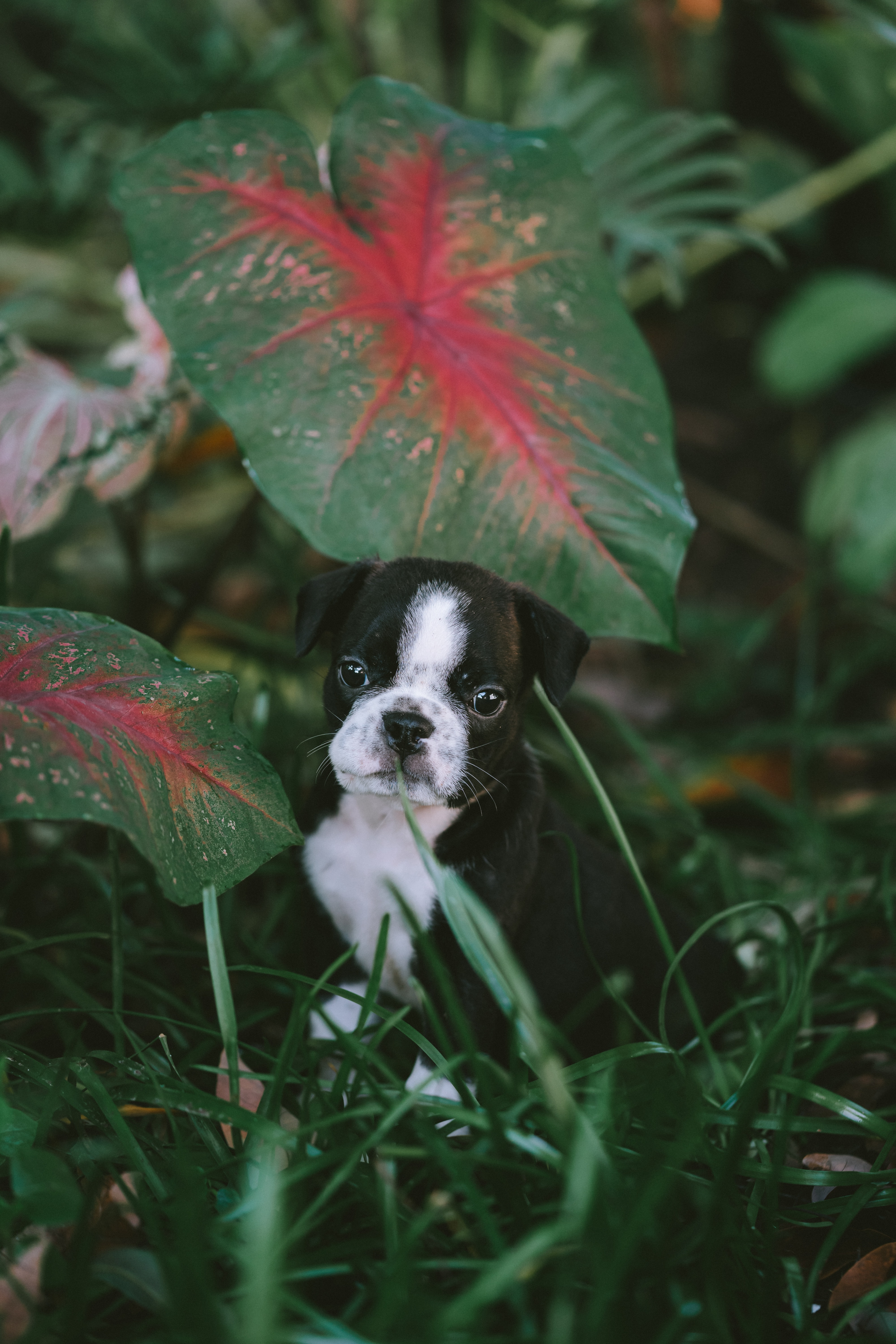 152917 Screensavers and Wallpapers Pet for phone. Download Animals, Puppy, Dog, Pet, Grass, Nice, Sweetheart pictures for free