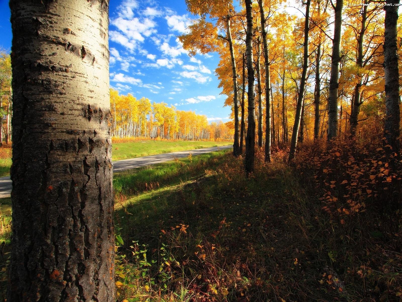 7732 скачать обои Пейзаж, Деревья, Осень - заставки и картинки бесплатно