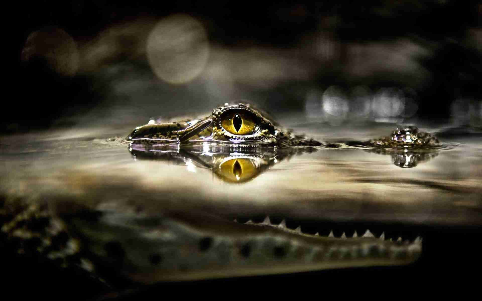 104841 download wallpaper Animals, Crocodile, Eye, Water, Predator, Hunting, Hunt, Lurk, Hide screensavers and pictures for free