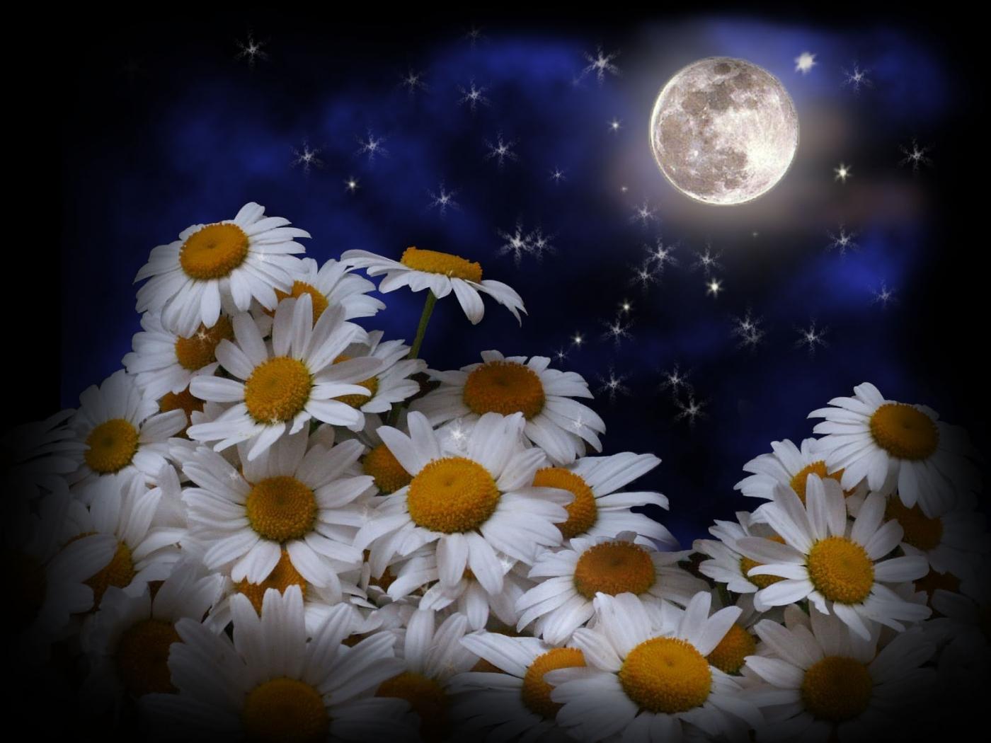 Скачать картинку Луна, Растения, Ромашки, Цветы в телефон бесплатно.