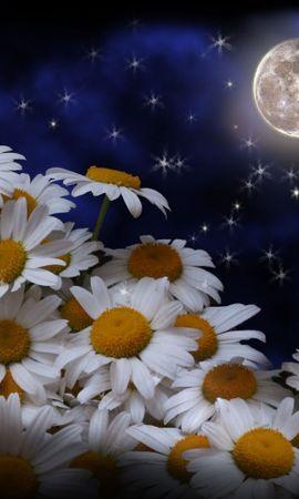 44730 скачать обои Растения, Цветы, Луна, Ромашки - заставки и картинки бесплатно