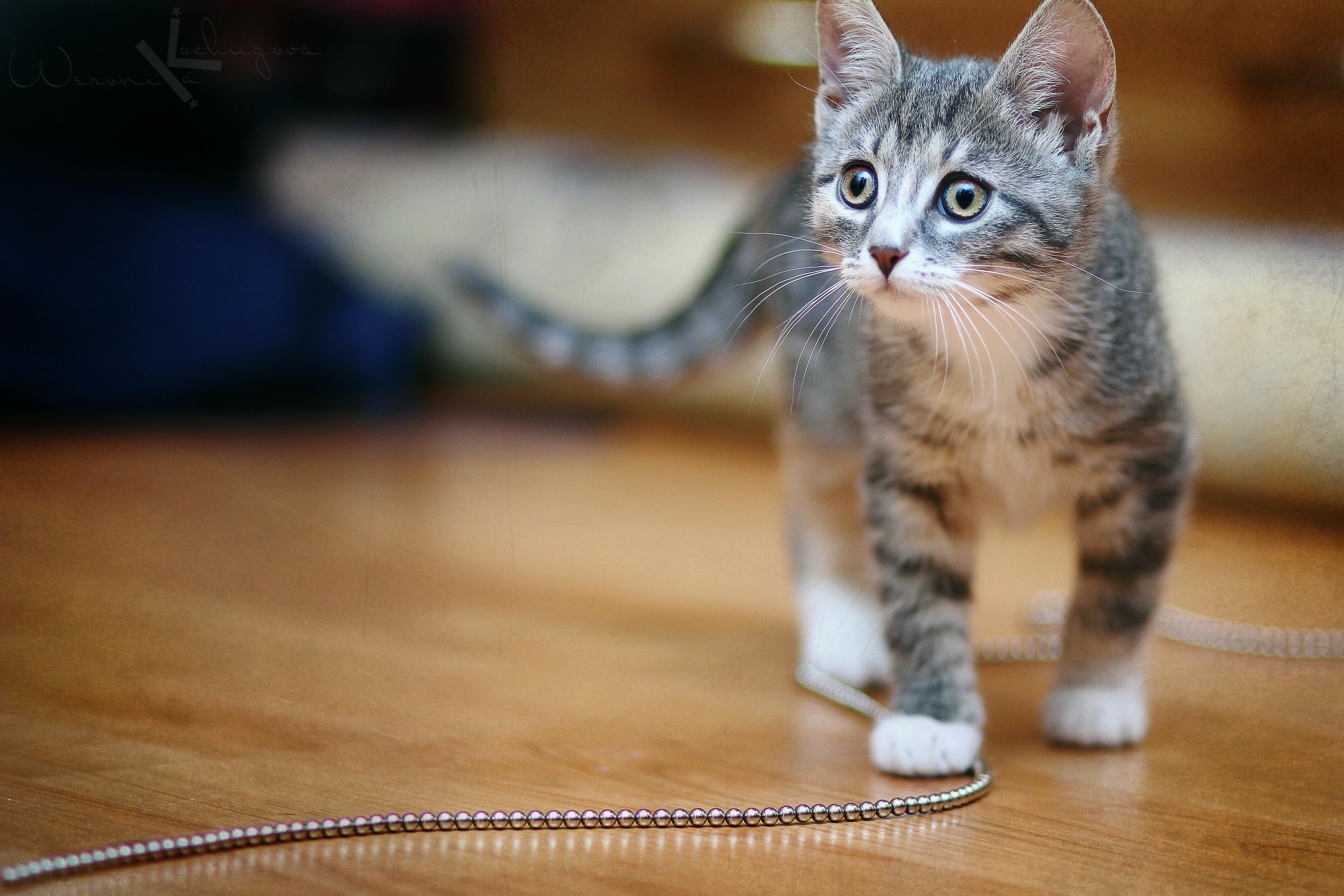 80964 download wallpaper Animals, Kitty, Kitten, Beads, Chain, Sight, Opinion, Playful screensavers and pictures for free