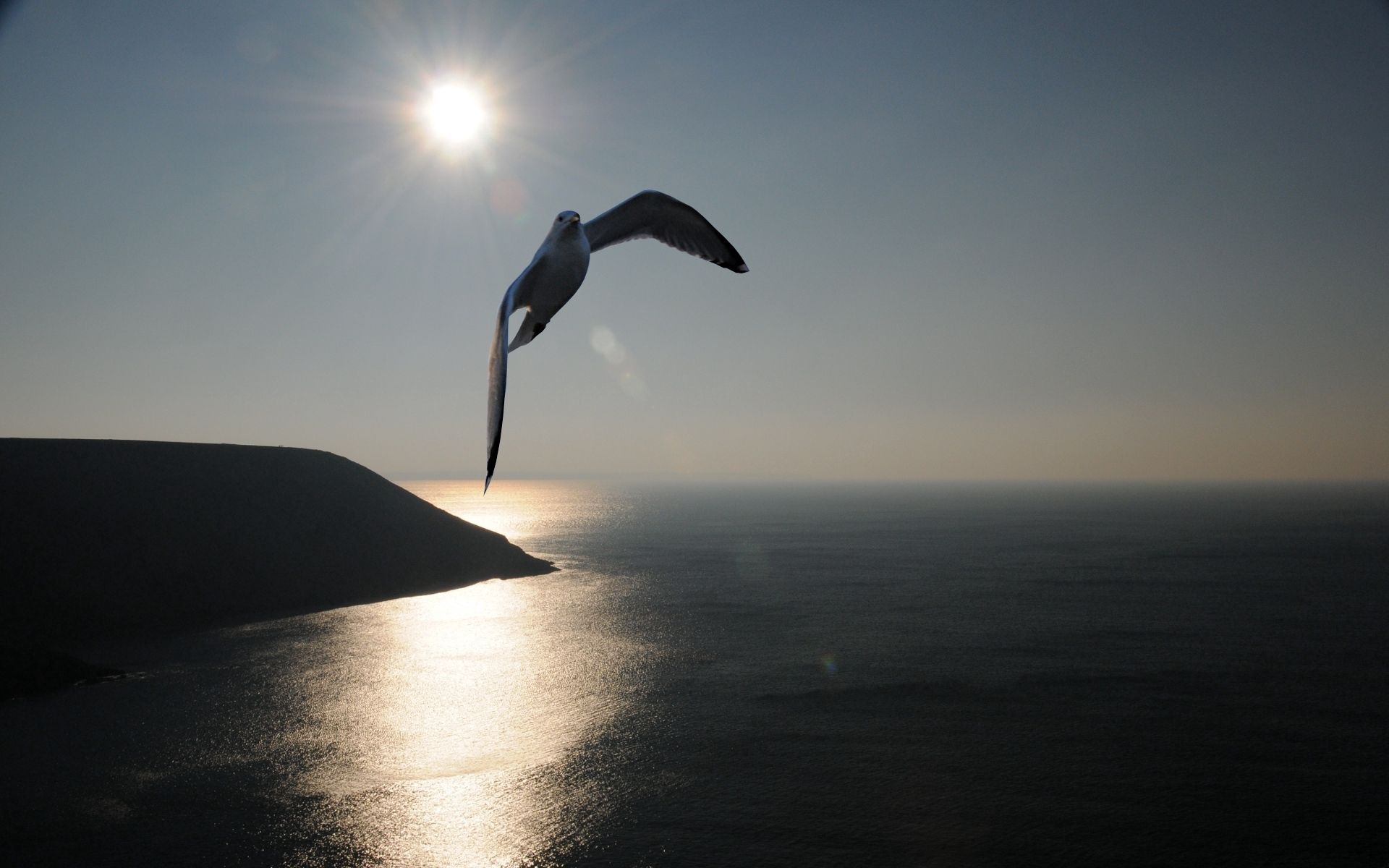 139917 download wallpaper Animals, Gull, Seagull, Sea, Sky, Silhouette, Shadow, Flight, Sweep, Wave screensavers and pictures for free