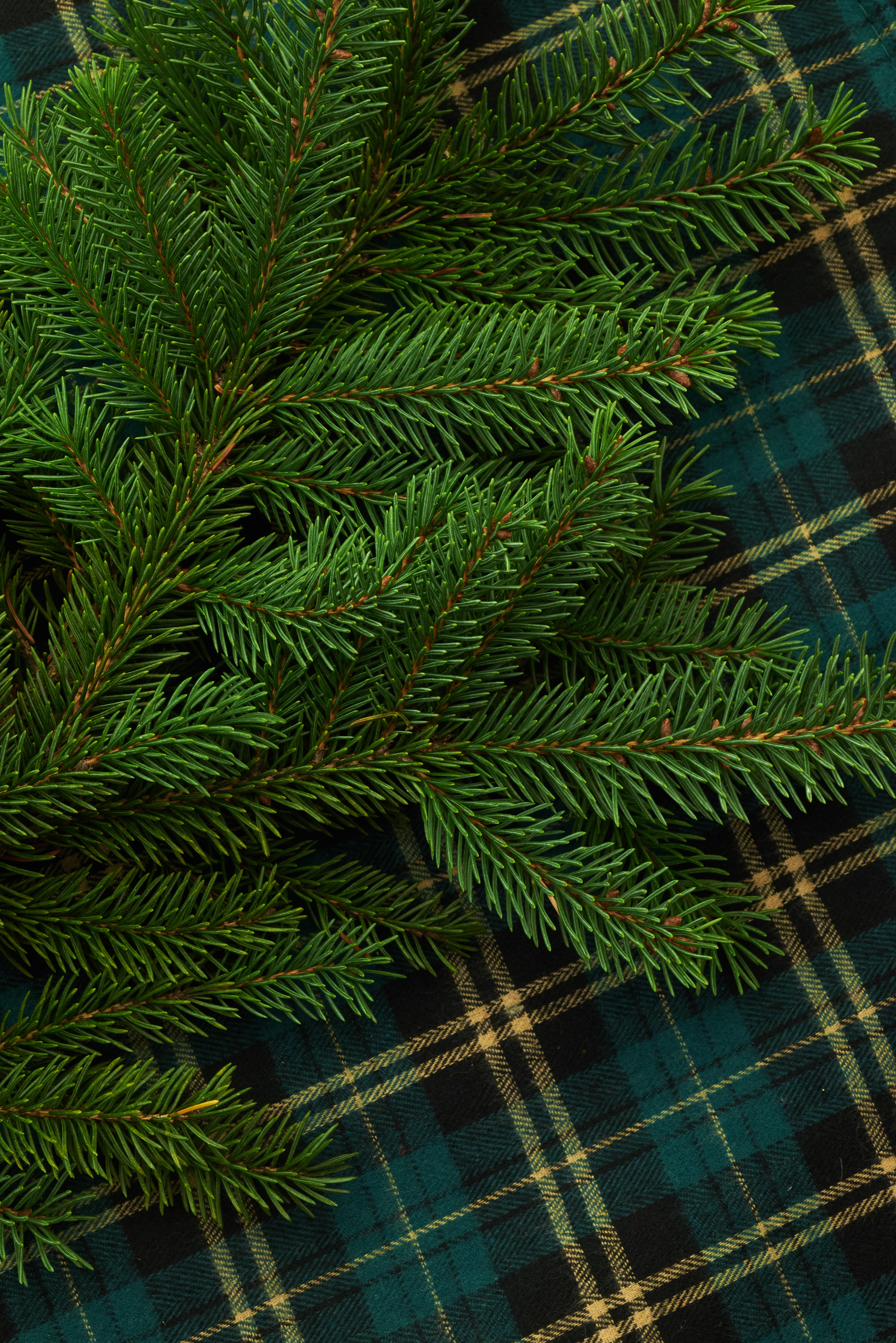 67765 Screensavers and Wallpapers Pine for phone. Download Pine, Miscellanea, Miscellaneous, Branch, Needles pictures for free