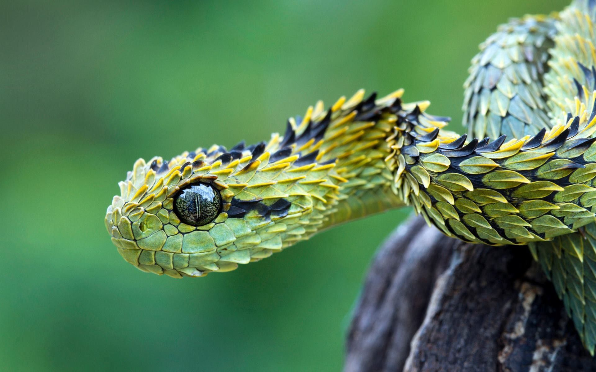 82026 download wallpaper Animals, Snake, Scales, Scale, Eyes screensavers and pictures for free