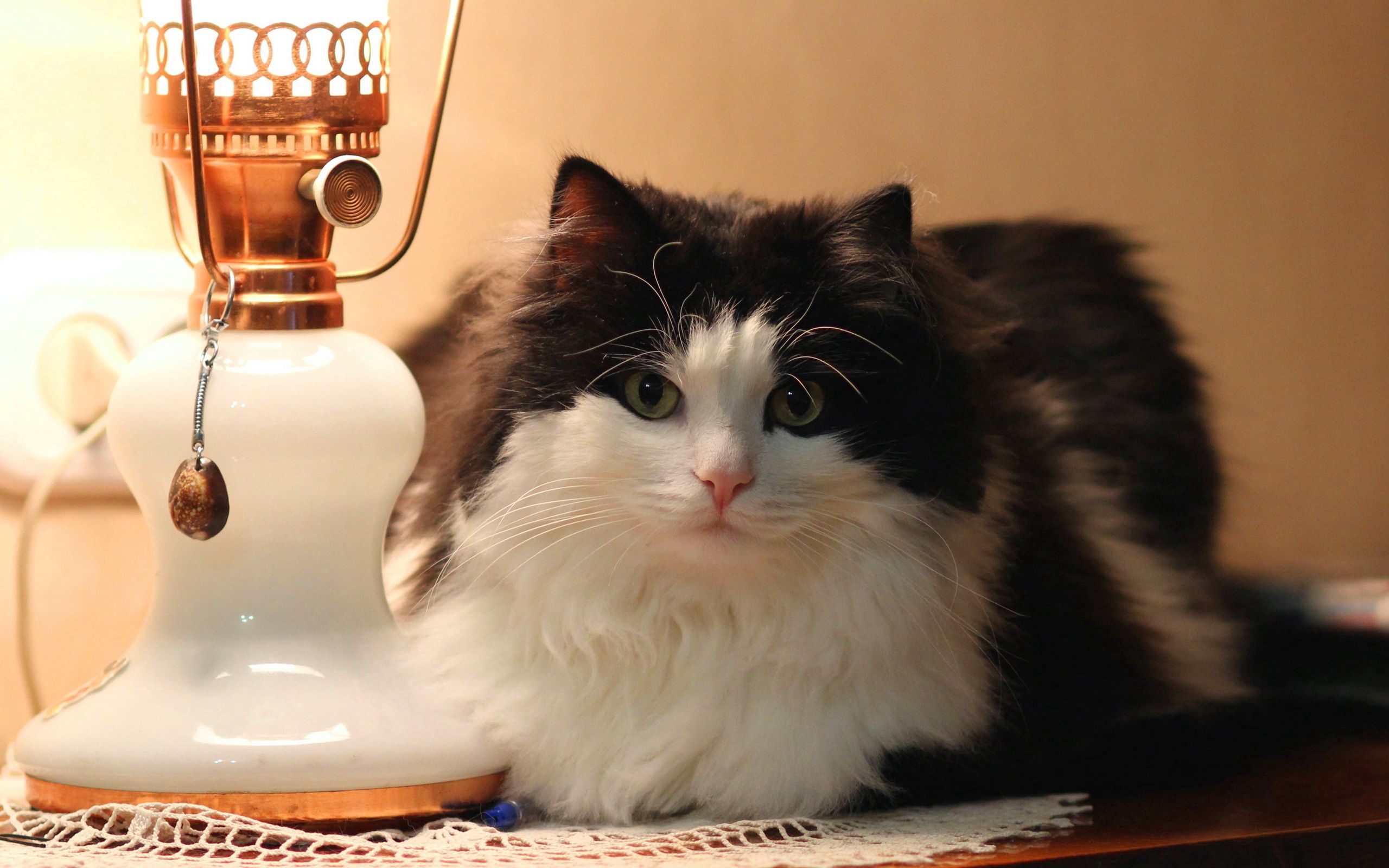 136982 download wallpaper Animals, Cat, Lamp, Floor Lamp, Fluffy, To Lie Down, Lie screensavers and pictures for free