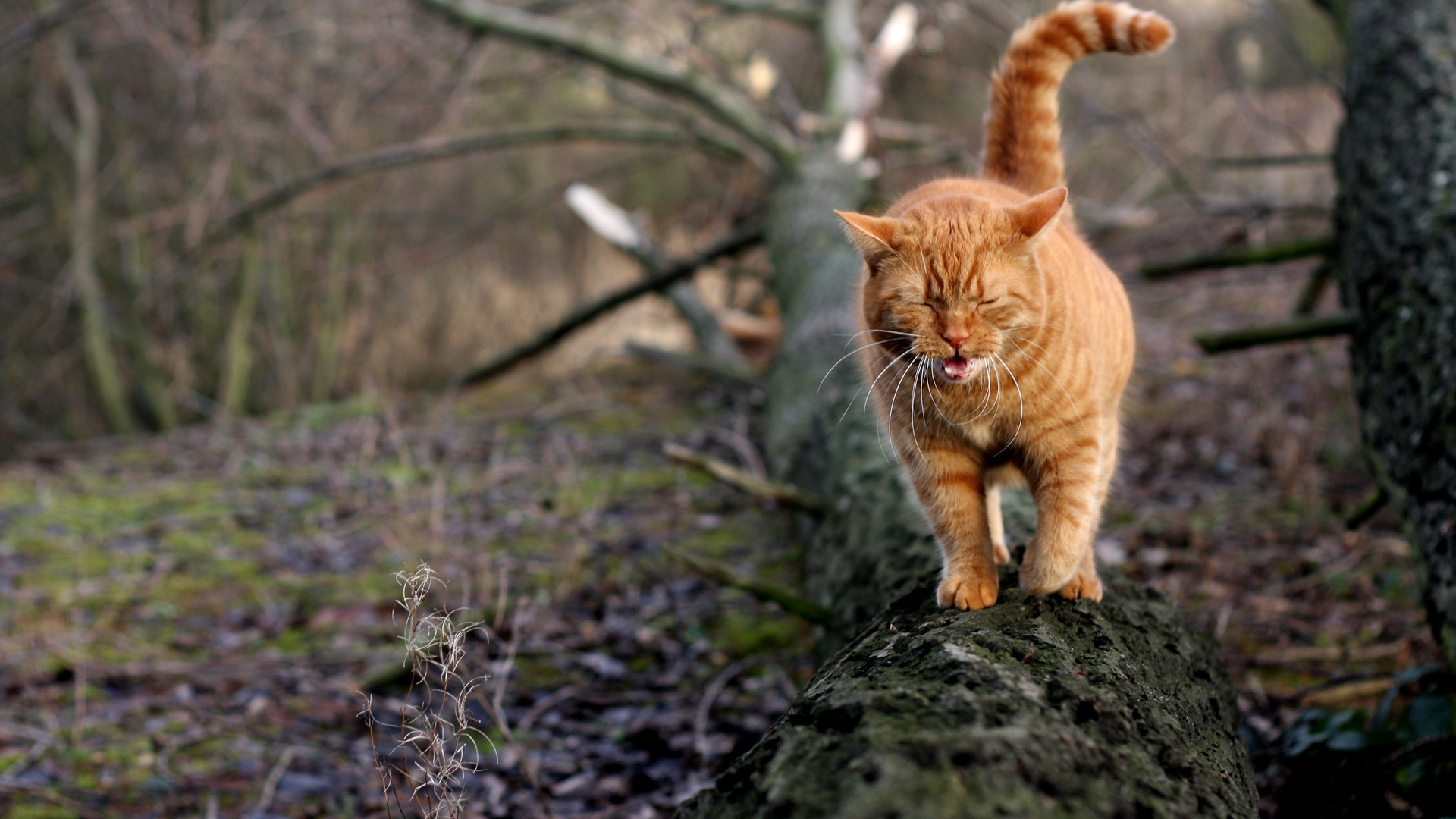 20673 download wallpaper Animals, Cats screensavers and pictures for free