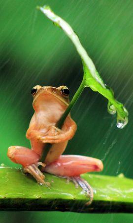 35387 baixar papel de parede Animais, Frogs - protetores de tela e imagens gratuitamente