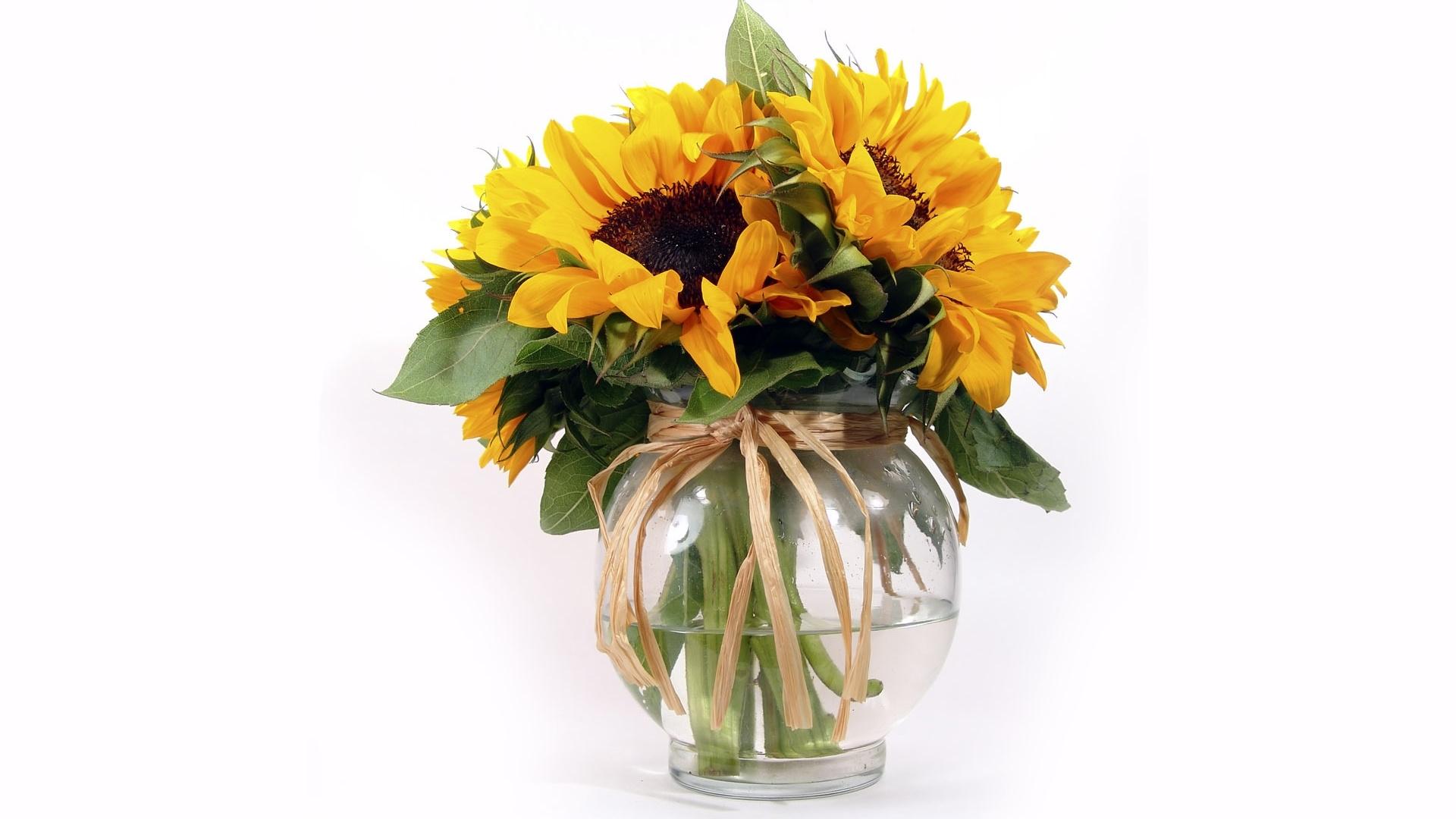 49303 скачать обои Растения, Цветы - заставки и картинки бесплатно