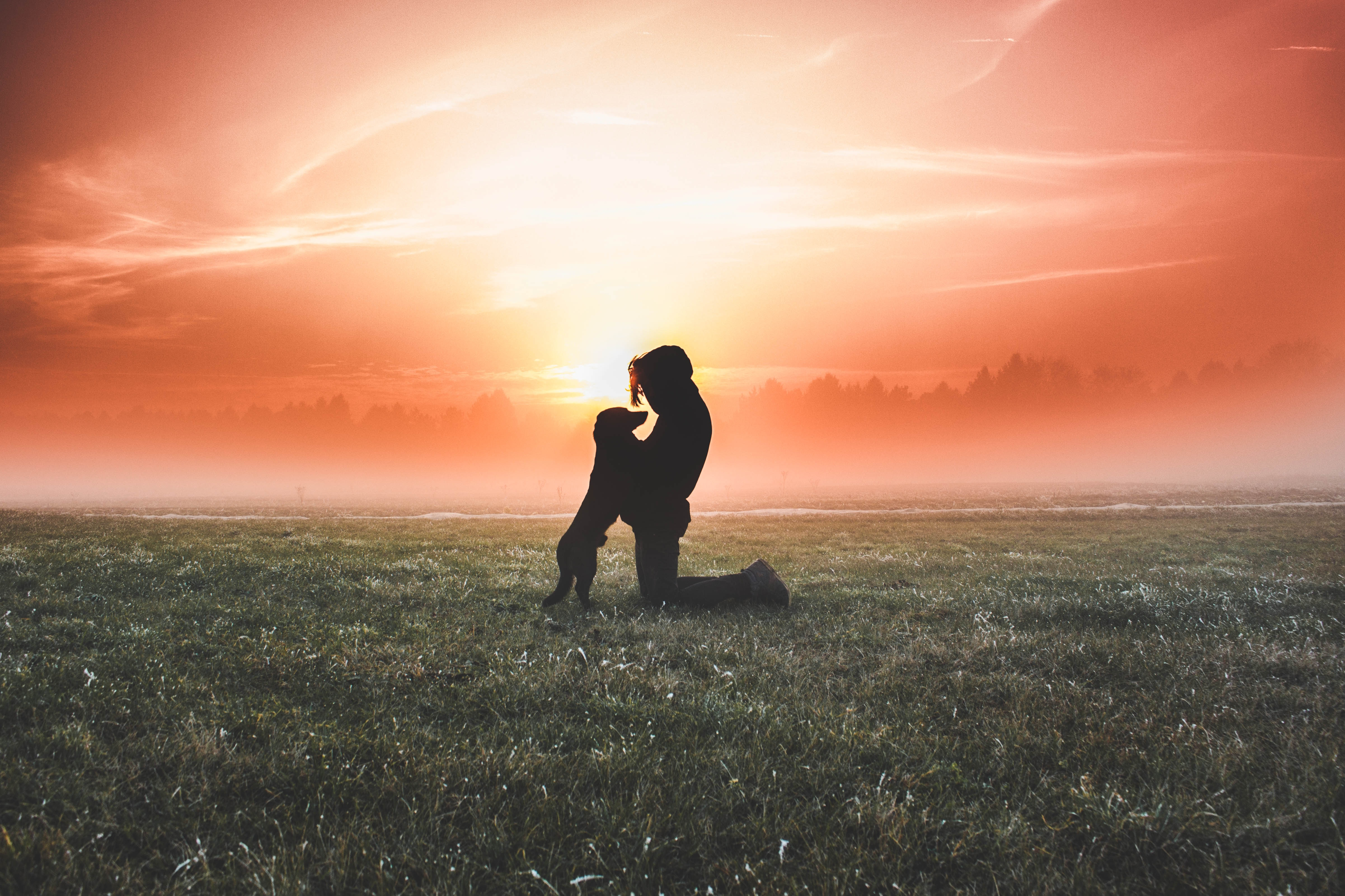 76957 free wallpaper 2160x3840 for phone, download images Silhouette, Miscellanea, Miscellaneous, Dog, Fog, Field, Human, Person 2160x3840 for mobile
