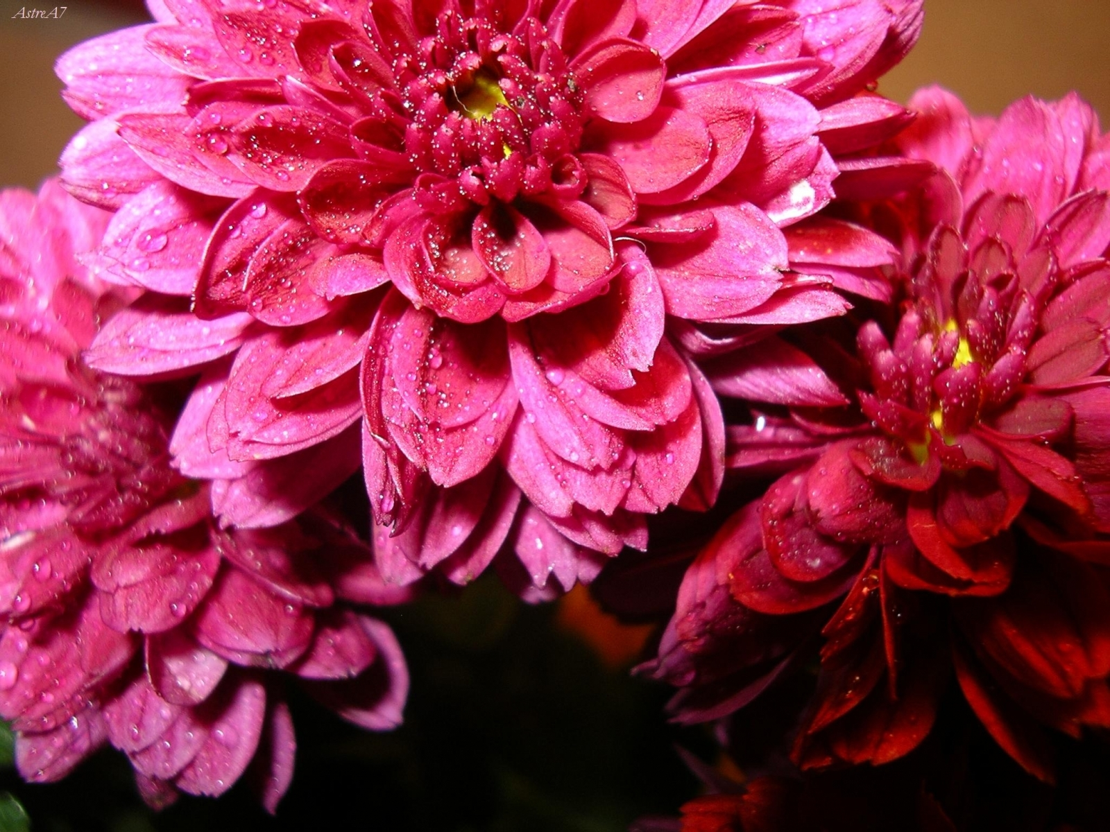 1612 download wallpaper Plants, Flowers screensavers and pictures for free