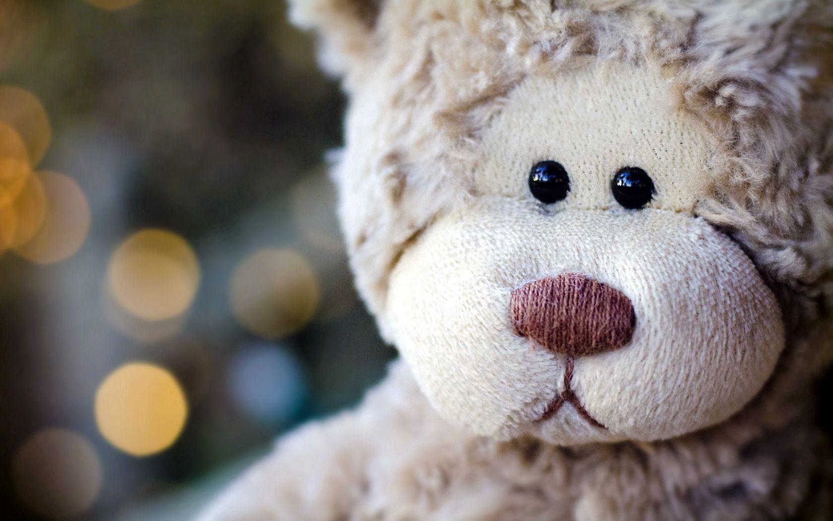 74237 Hintergrundbild herunterladen Spielzeug, Blendung, Verschiedenes, Sonstige, Schnauze, Kopf, Plüschbär, Der Teddybär - Bildschirmschoner und Bilder kostenlos