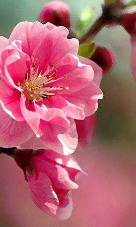 35059 descargar fondo de pantalla Plantas, Flores: protectores de pantalla e imágenes gratis