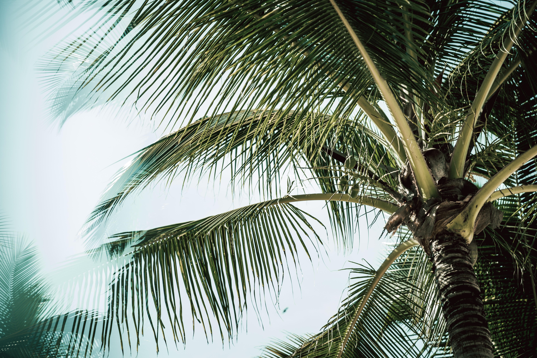 122349 скачать обои Ветки, Природа, Листья, Дерево, Пальма, Тропический - заставки и картинки бесплатно
