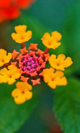 53092 скачать обои Макро, Лепестки, Листья, Растение, Цветы - заставки и картинки бесплатно