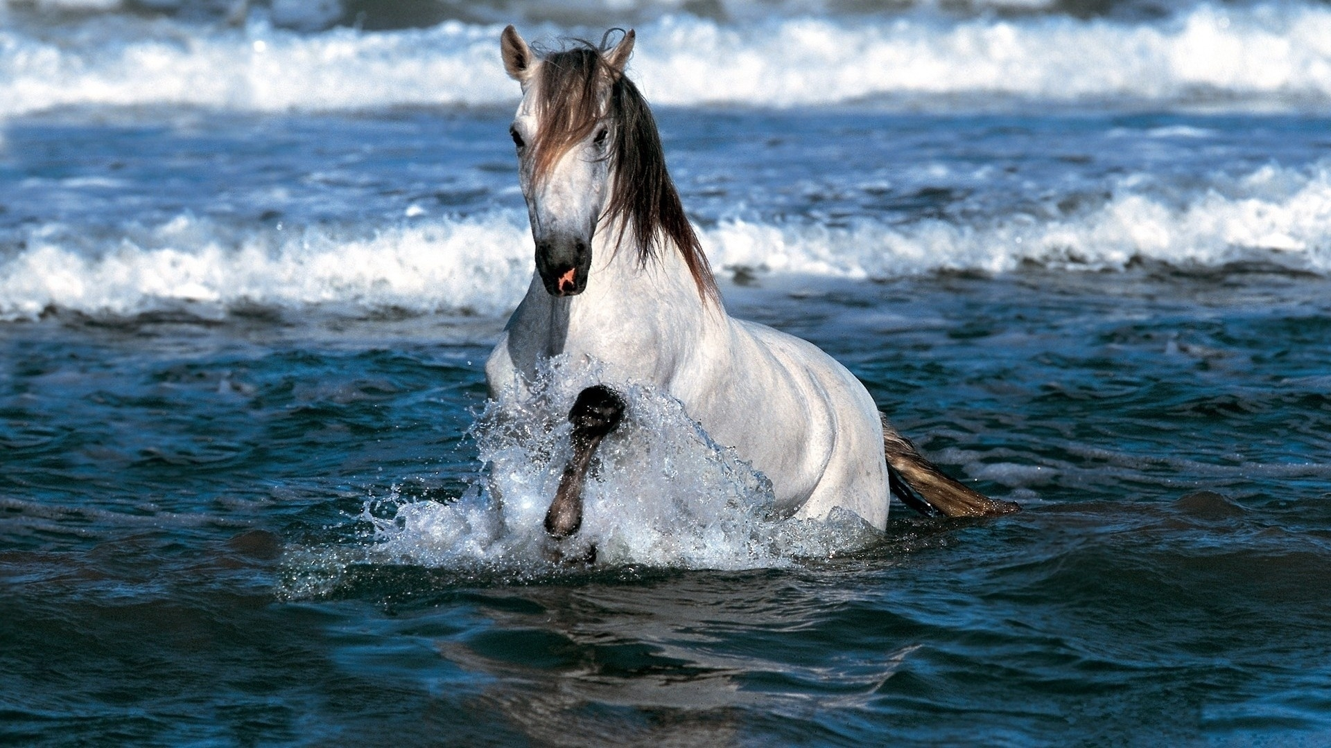 32483 download wallpaper Horses, Animals screensavers and pictures for free