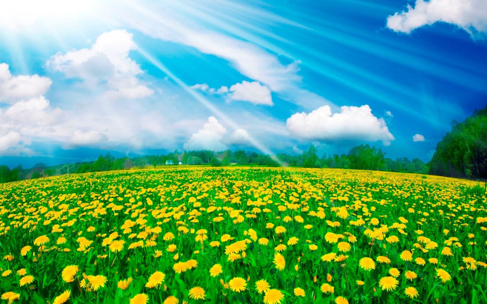 18754 скачать обои Поля, Пейзаж, Цветы, Небо, Одуванчики, Облака - заставки и картинки бесплатно
