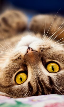 17627 download wallpaper Animals, Cats screensavers and pictures for free