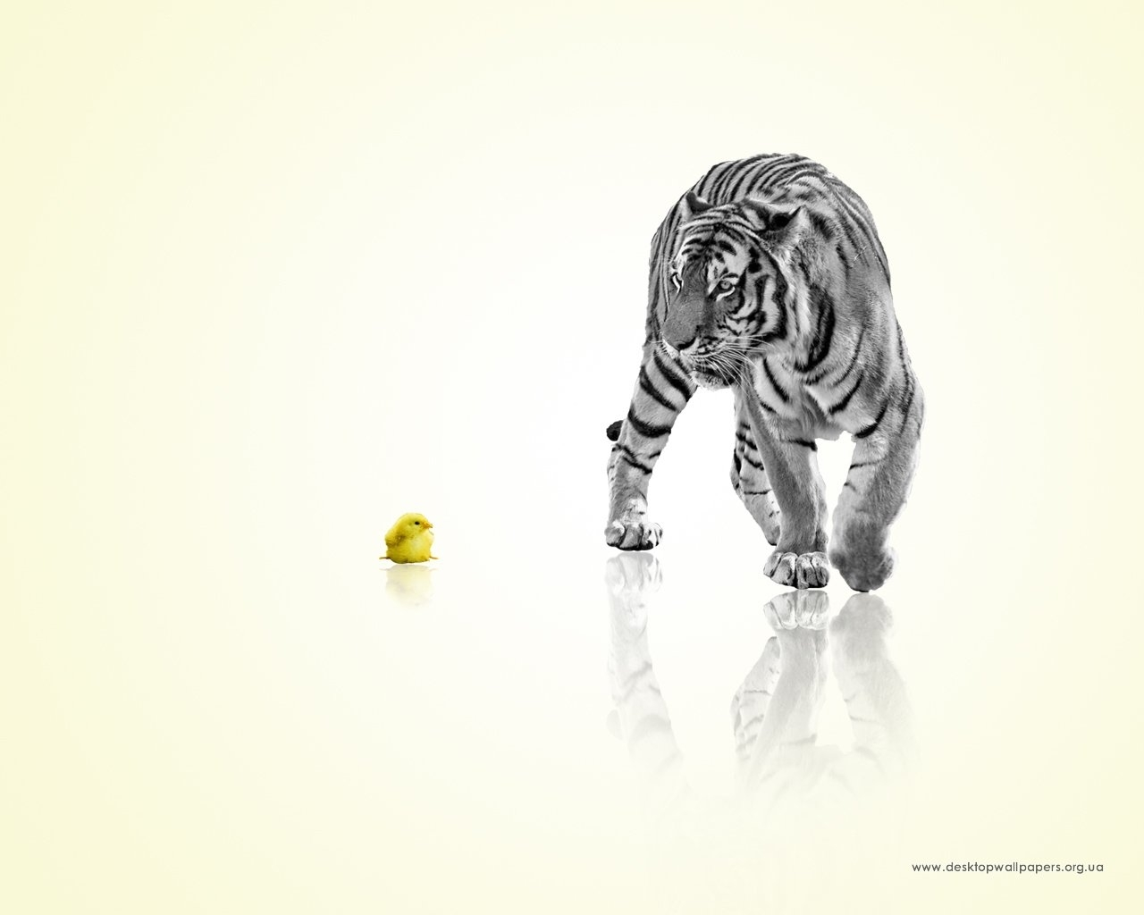 4002 download wallpaper Animals, Chicks, Tigers screensavers and pictures for free