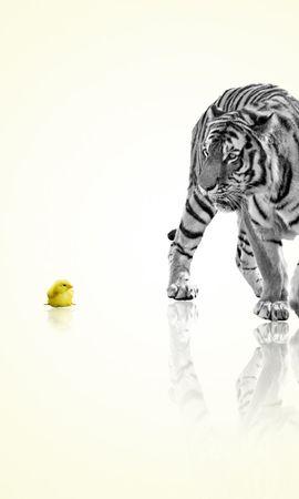 4002 descargar fondo de pantalla Animales, Polluelos, Tigres: protectores de pantalla e imágenes gratis