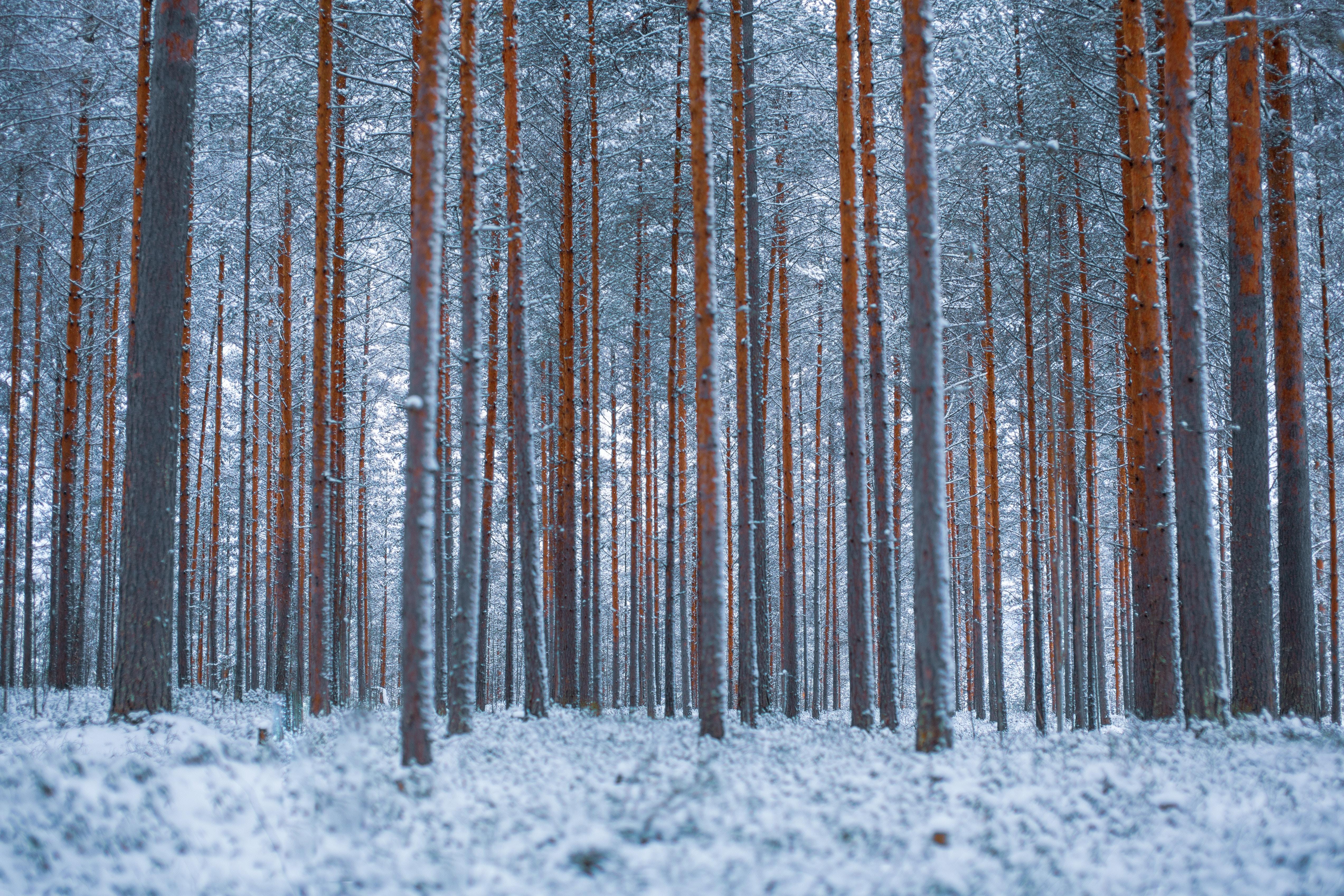 137262 免費下載壁紙 极简主义, 森林, 树, 冬天, 雪 屏保和圖片