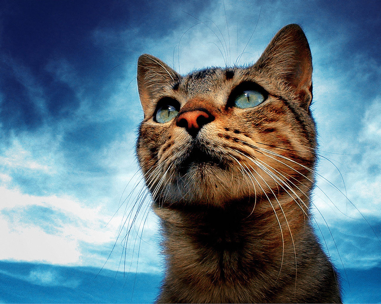 3900 download wallpaper Animals, Cats screensavers and pictures for free
