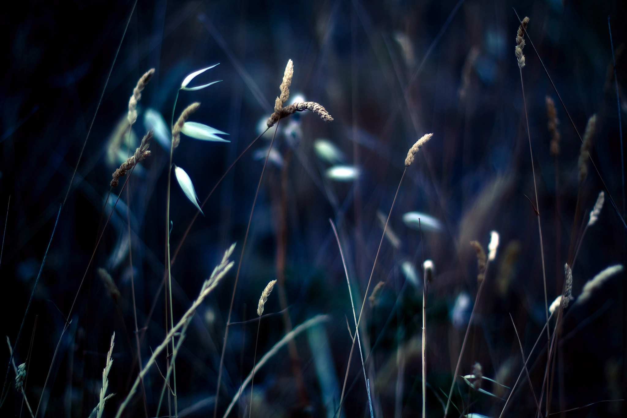 107216 download wallpaper Grass, Plant, Macro, Shine, Light screensavers and pictures for free