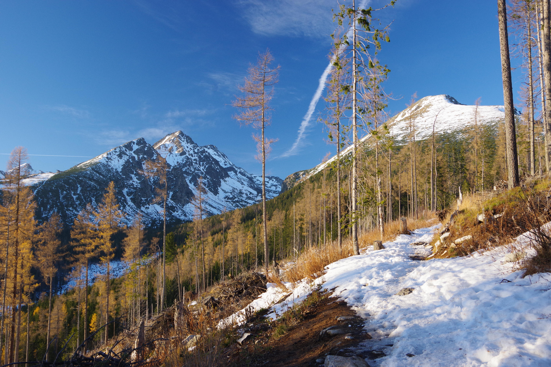 112689 скачать обои Гора, Деревья, Снег, Природа, Пейзаж, Сосны - заставки и картинки бесплатно