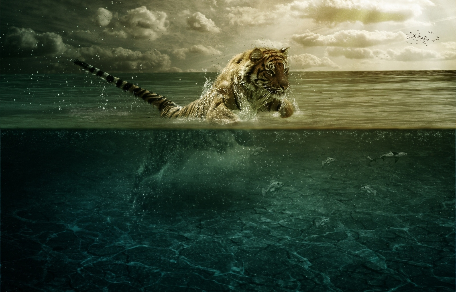 39220 download wallpaper Animals, Tigers screensavers and pictures for free