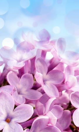 18735 скачать обои Растения, Цветы, Фон - заставки и картинки бесплатно