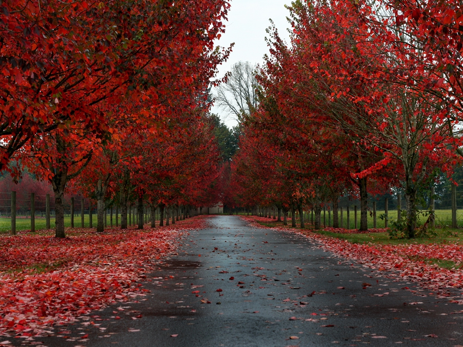 7244 download wallpaper Landscape, Trees, Roads, Autumn screensavers and pictures for free