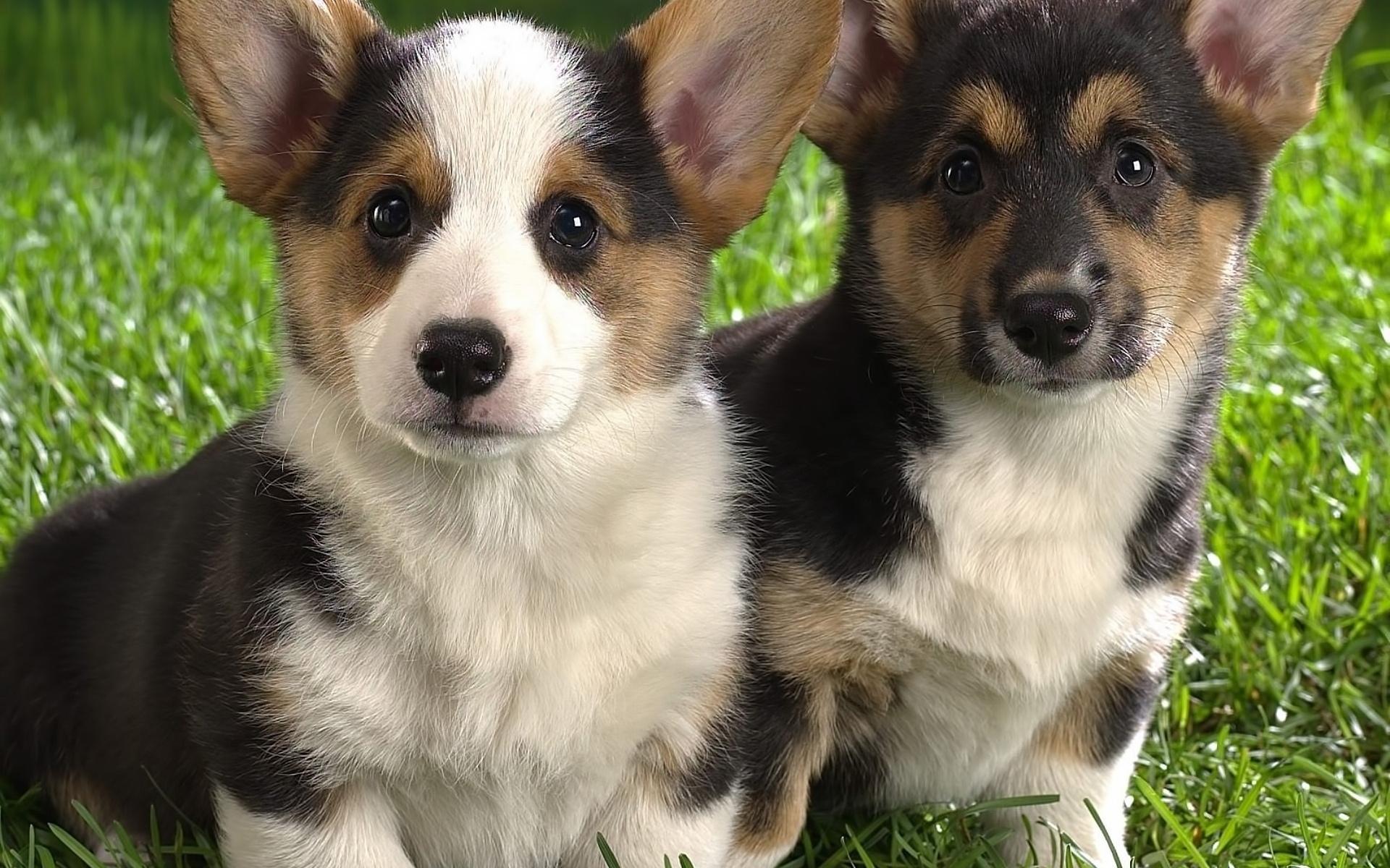 24215 скачать обои Животные, Собаки - заставки и картинки бесплатно