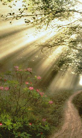 12145 скачать обои Растения, Пейзаж, Дороги, Солнце - заставки и картинки бесплатно
