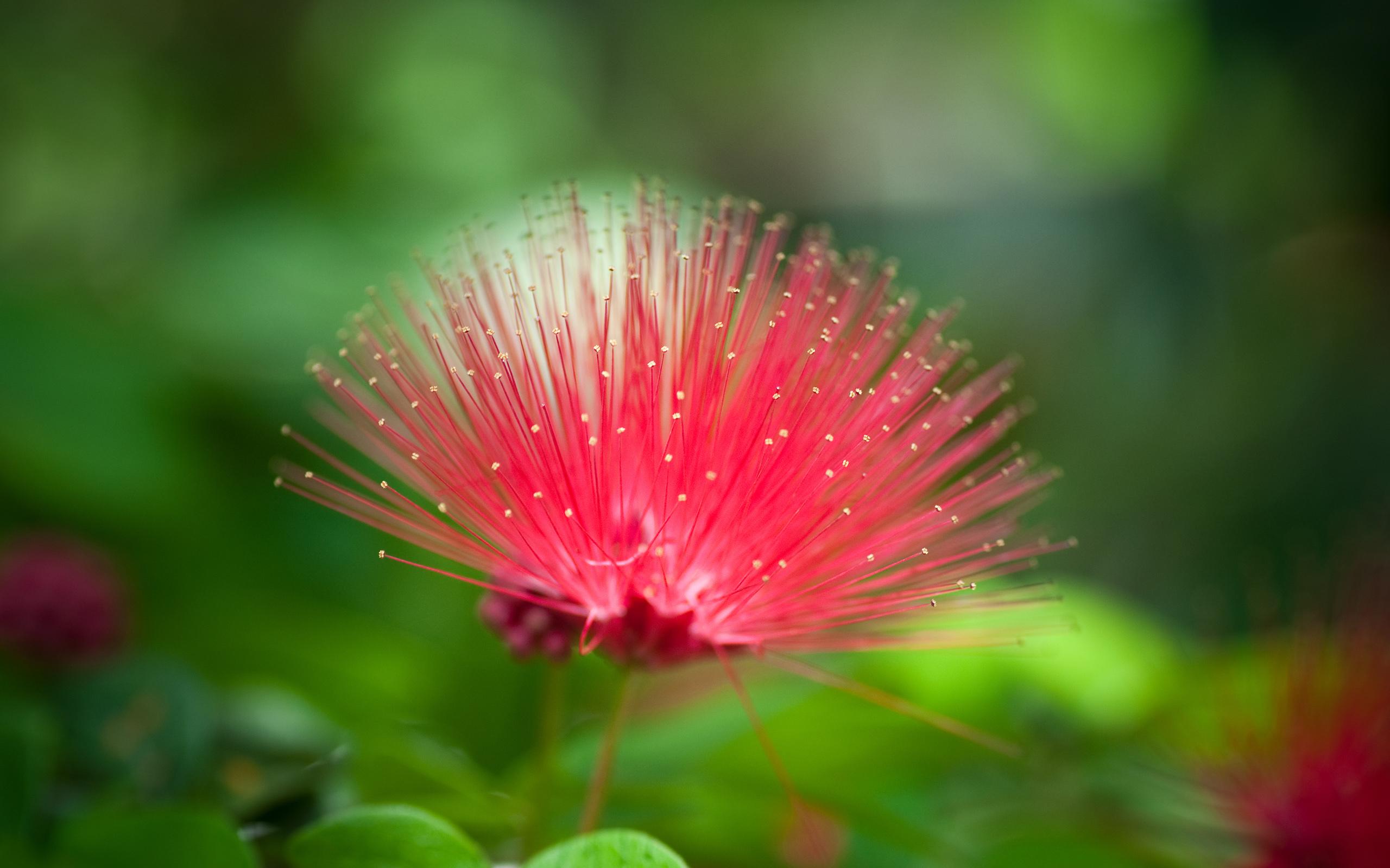 14824 descargar fondo de pantalla Plantas, Flores: protectores de pantalla e imágenes gratis