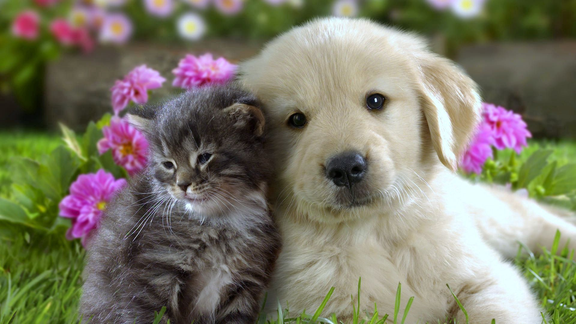 112766 Screensavers and Wallpapers Kitten for phone. Download Animals, Flowers, Grass, Kitty, Kitten, Muzzle, Puppy pictures for free