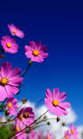 47549 скачать обои Растения, Цветы - заставки и картинки бесплатно