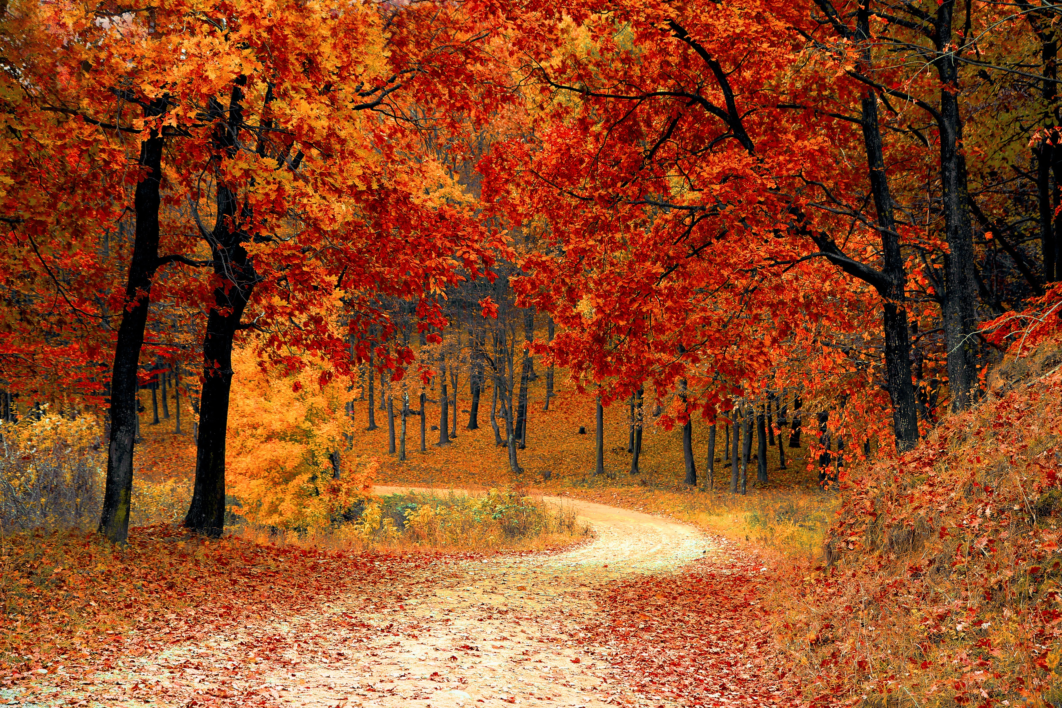 154193 download wallpaper Nature, Autumn, Forest, Path, Foliage, Park, Colorful, Colourful screensavers and pictures for free