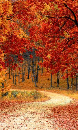 154193 скачать обои Природа, Осень, Лес, Тропинка, Листва, Парк, Красочный - заставки и картинки бесплатно