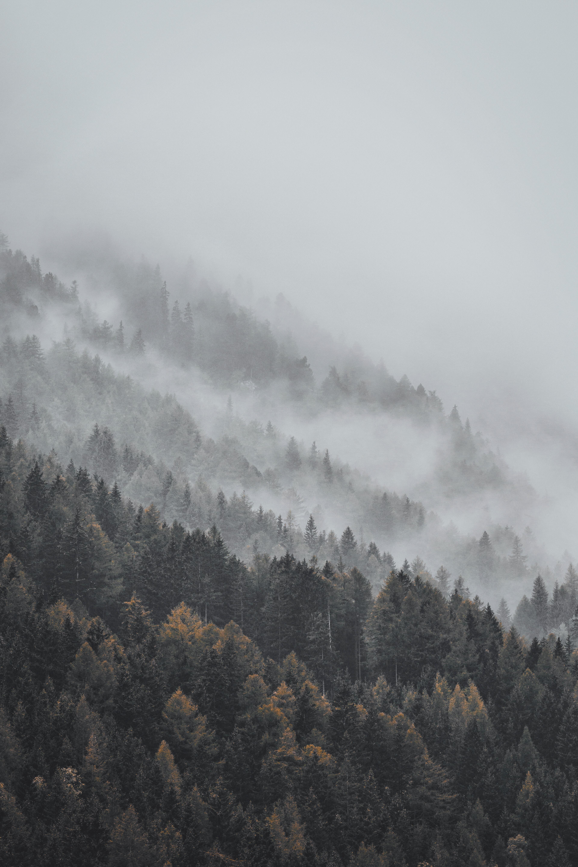 63945 Salvapantallas y fondos de pantalla Paisaje en tu teléfono. Descarga imágenes de Naturaleza, Bosque, Niebla, Árboles, Tops, Arriba, Paisaje gratis