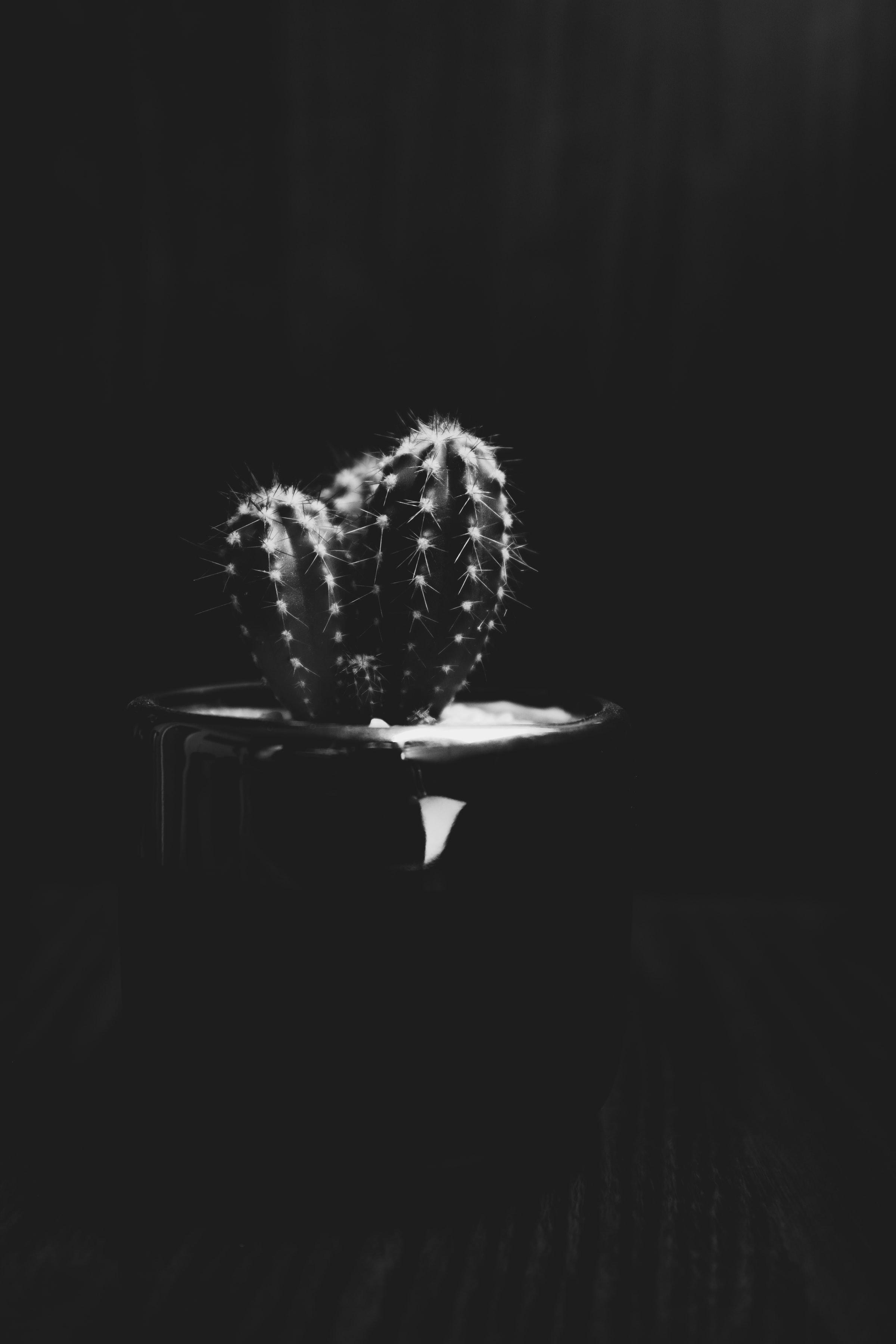 149588 descargar fondo de pantalla Cactus, Cacto, Planta, Aguja, Bw, Chb, El Negro: protectores de pantalla e imágenes gratis