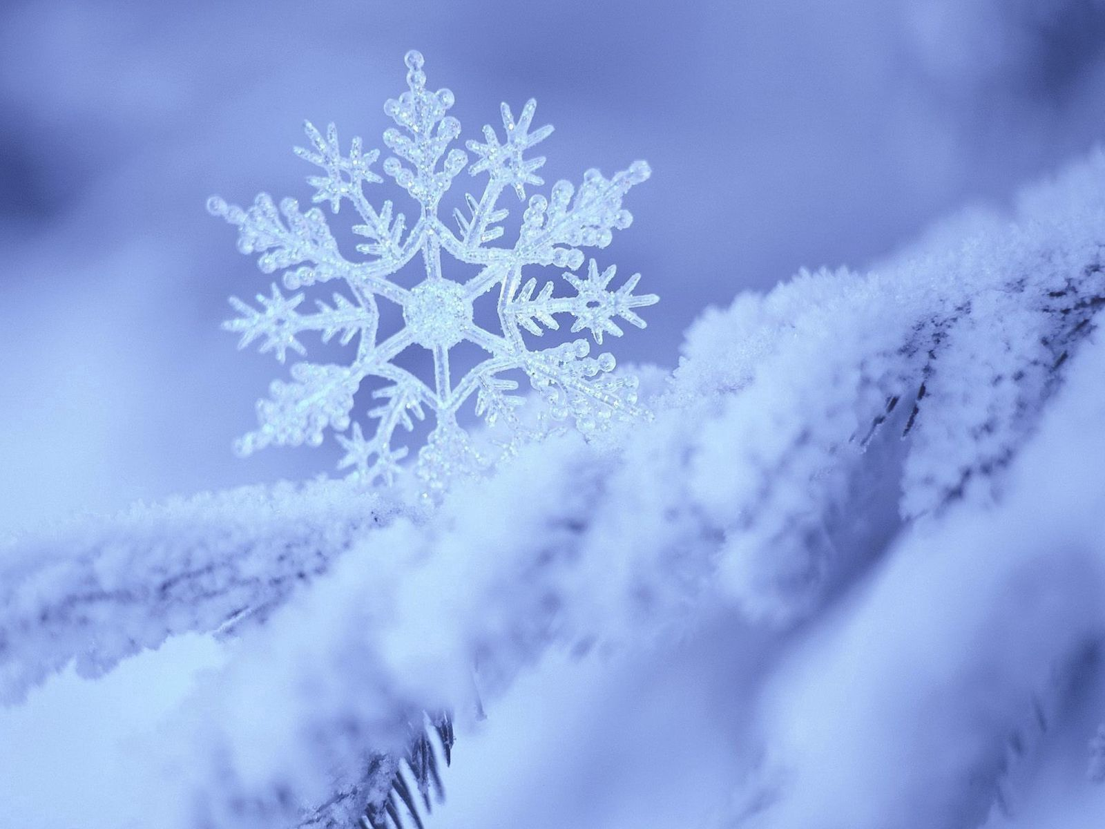 89699 Screensavers and Wallpapers Form for phone. Download Winter, Snow, Macro, Pattern, Form, Snowflake pictures for free