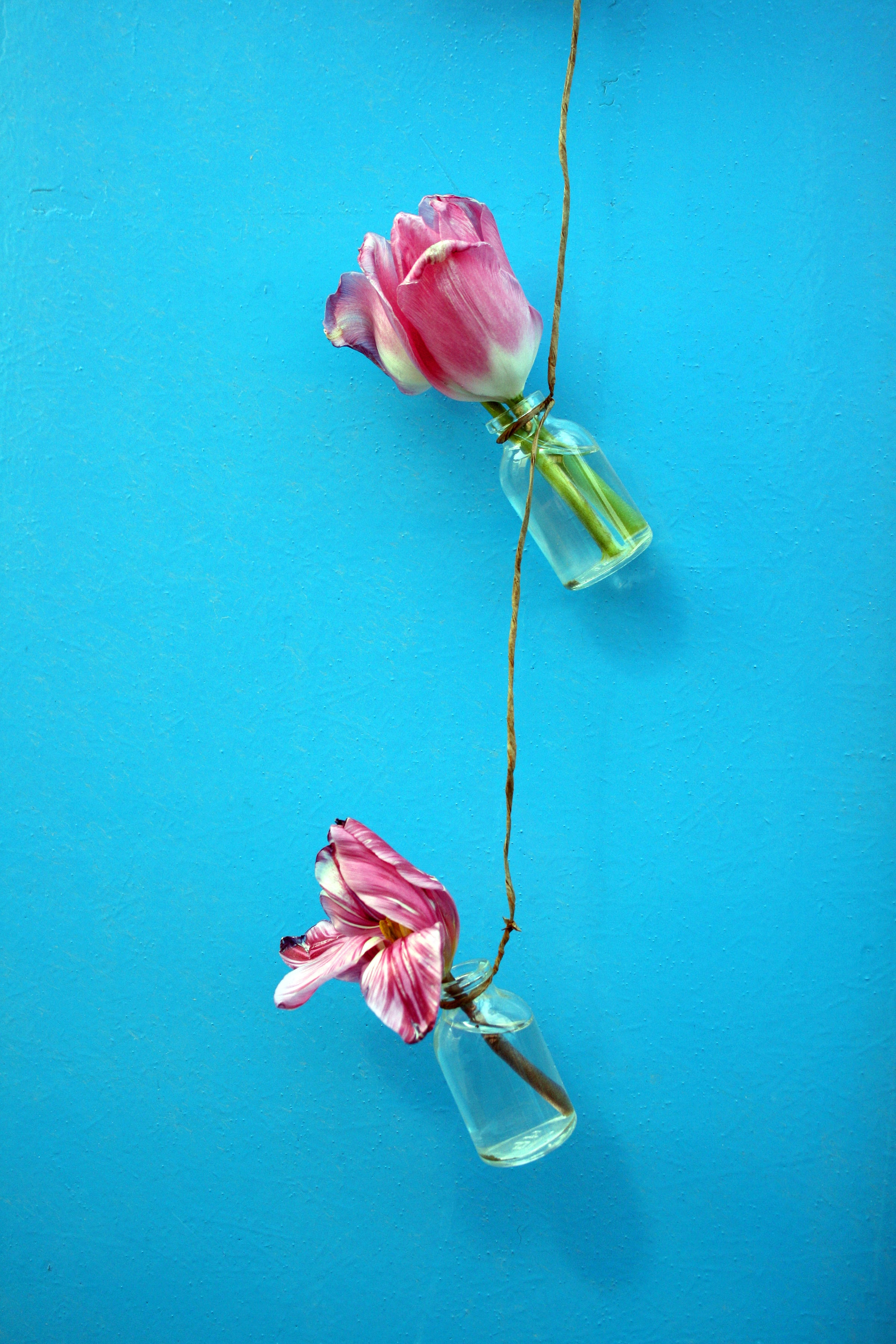 72202 download wallpaper Wall, Flowers, Tulips, Rope screensavers and pictures for free